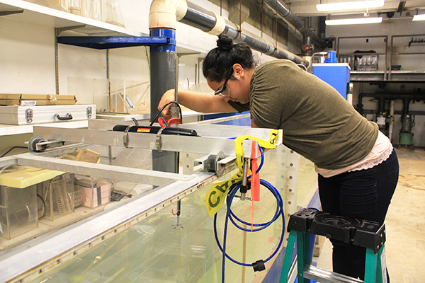 Diana Rodriguez, a senior at Hoover High School in Des Moines, Iowa, issues a water velocity test in a test flume, located in Town Engineering Building at Iowa State University.