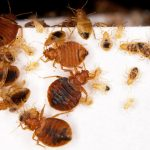 Study: requiring landlords to disclose bedbugs cuts infestations, creates long-term savings